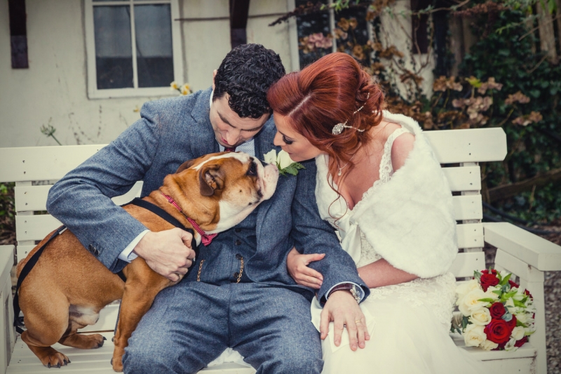 Bride and groom kissing their English bulldog